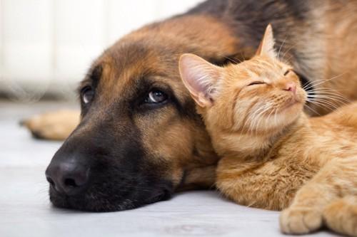寄り添ってくつろぐ猫と犬