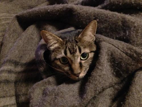 暗い所にいる時の猫