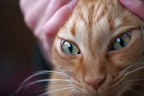 猫にいたずらする人