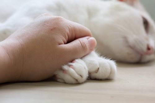 手を繋ぐ猫と人