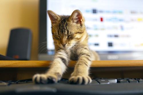 キーボードの上に両手を伸ばす猫