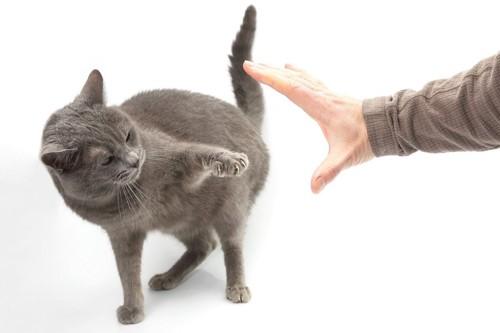 人の手を嫌がる猫