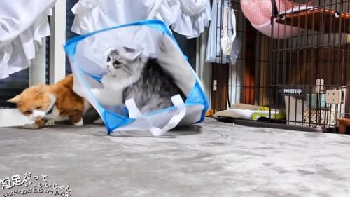 茶白猫に飛びかかる猫