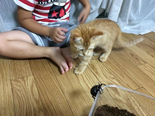 カブトムシと子猫