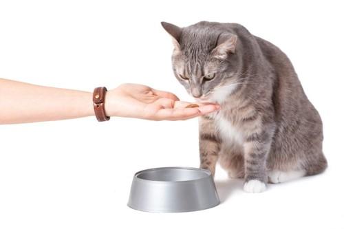 餌を貰う猫