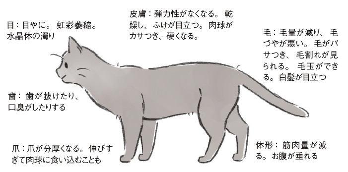 老猫の特徴