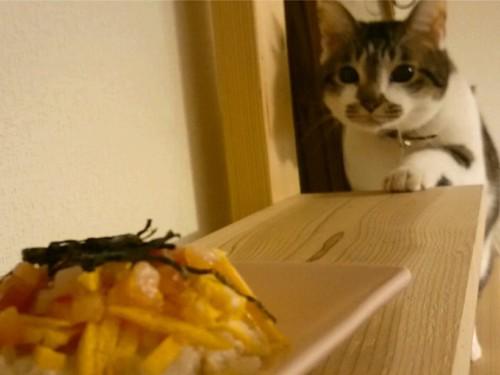 やってくる猫