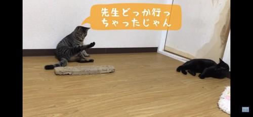 足を伸ばす猫