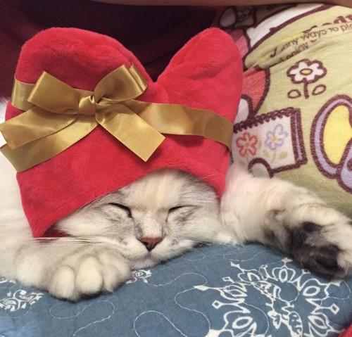 ハートのかぶりものをかぶった猫
