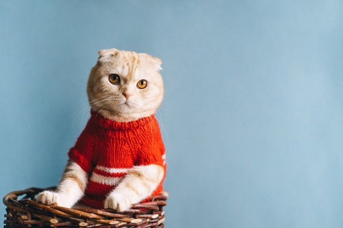 セーターを着て籠に入っている猫