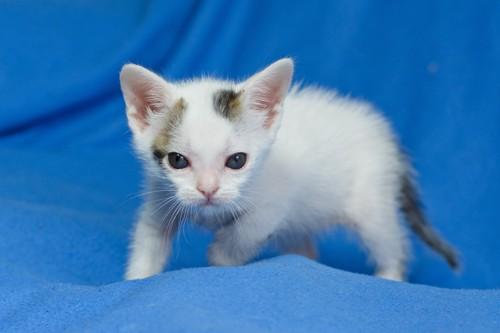 新生児の猫