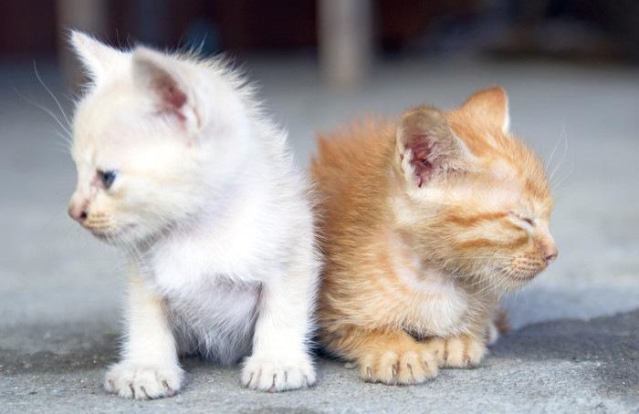 小さな子猫2匹