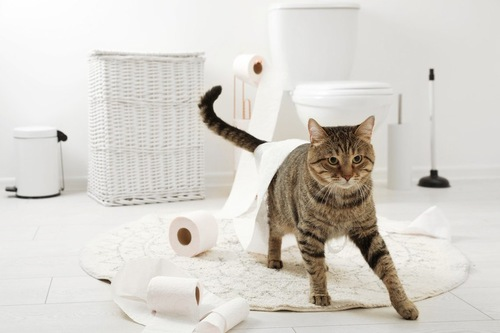 トイレットペーパーが絡みついた猫