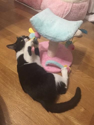#愛猫の写真#