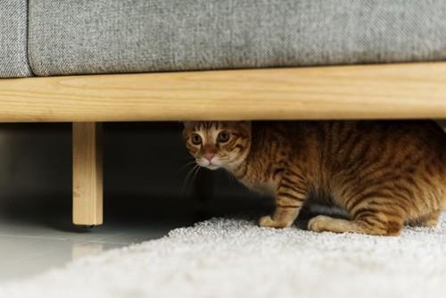 ソファーの下にいる猫