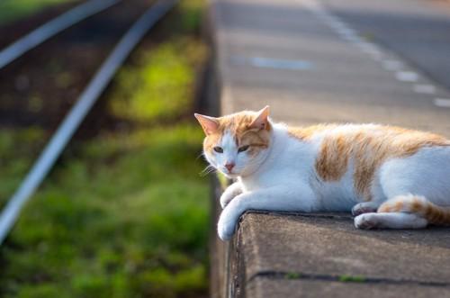 ホームでくつろぐ猫