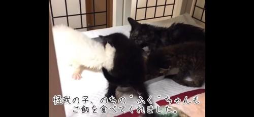 食べる子猫たち