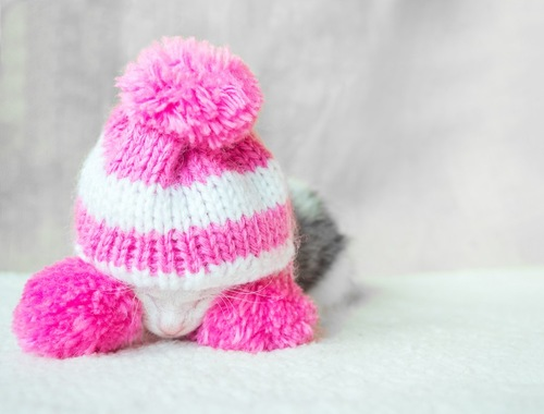 ピンクの毛糸の帽子をかぶった子猫