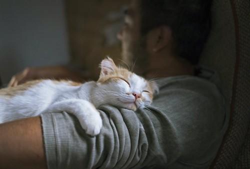 男性に抱かれて眠っている猫