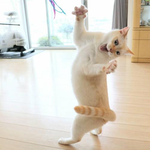 踊るチャコちゃん12