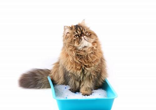 シリカゲル入りの猫砂を使っている猫