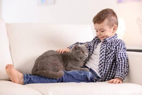 猫を撫でる少年