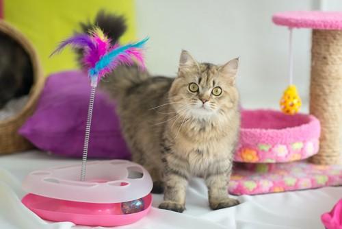 たくさんのおもちゃの横にいる猫