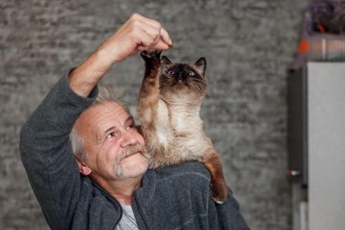 おじいさんと肩に乗るシャム猫