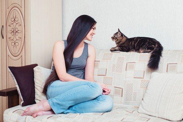 ソファで向かい合う猫と女性