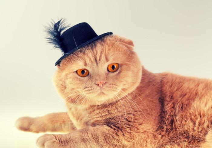 小さなハットをかぶる猫