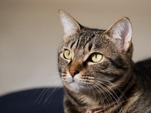 無表情な猫