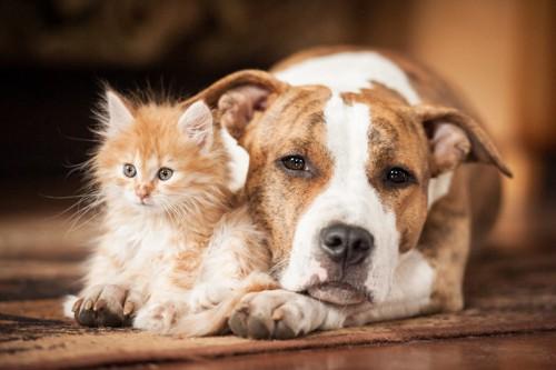 眠そうな犬と子猫
