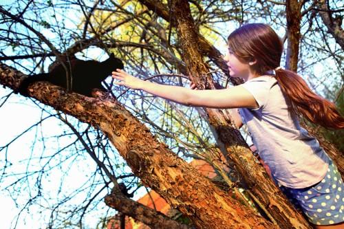 木の上の黒猫に手を伸ばす少女