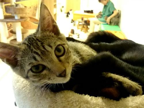 抱き合う猫