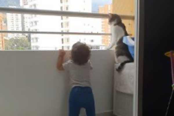 バルコニーから外を見る猫と幼児