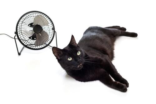 苦労扇風機と黒猫