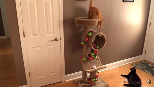 キャットタワーをクリスマスツリー