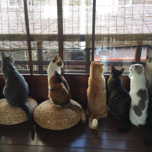 外を眺めるキャットアパートメントの猫達