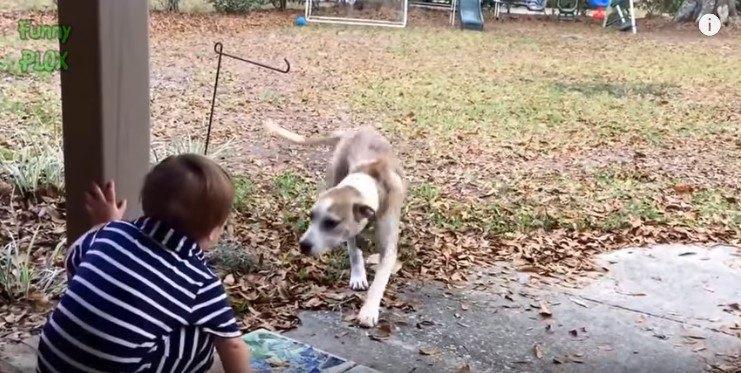 幼児に近づく犬