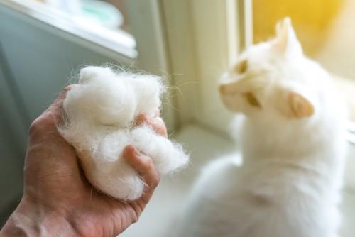 猫の抜け毛を持つ手と白猫