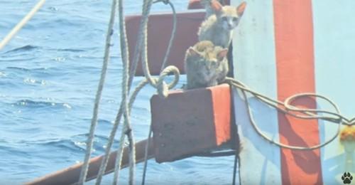 船上に2匹の猫