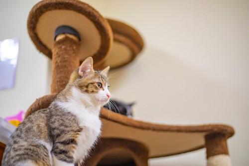 茶色のキャットタワーの前に座る横向きの猫