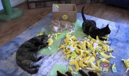 バナナのおもちゃの上に4匹の猫