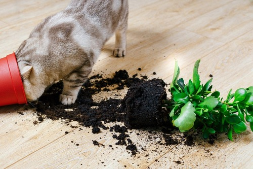 植木鉢をぶちまける猫