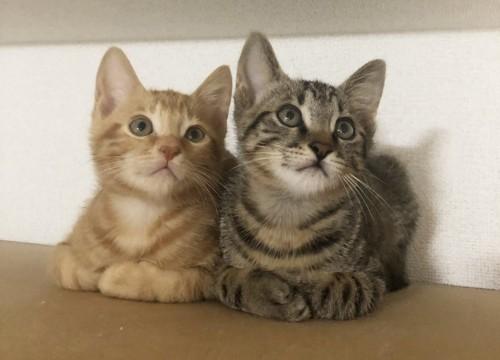 食器棚の上の子猫2匹