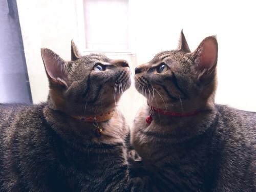 鏡のようなふたり