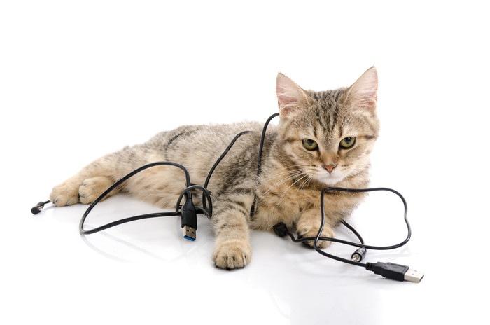 コードに絡まる猫