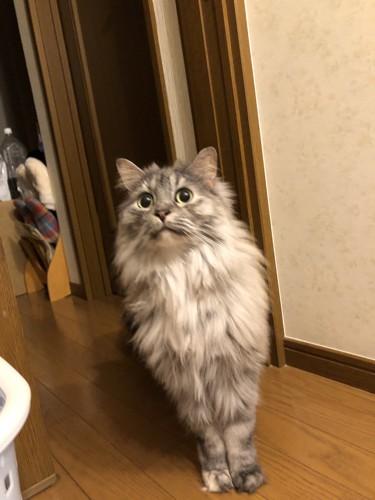 洗濯機に驚く猫