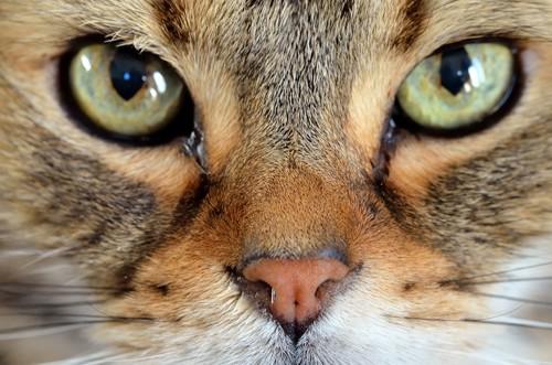 猫の眼差し