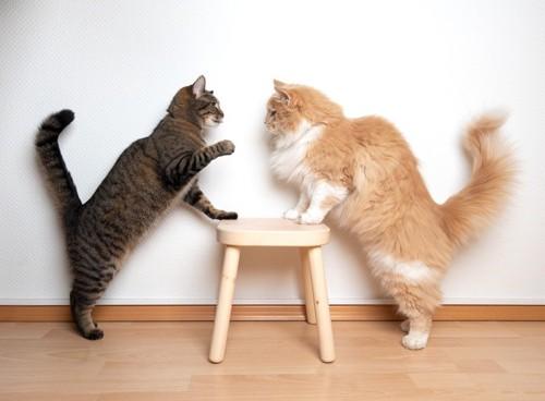 争う二匹の猫